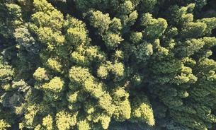 ドローンで撮影した俯瞰で見た森の写真素材 [FYI04833382]