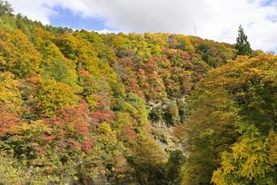 三途川渓谷秋景の写真素材 [FYI04833415]