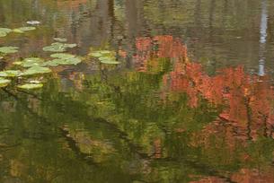 水面に映るモミジの写真素材 [FYI04833458]