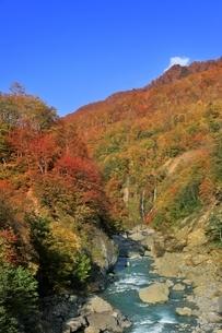 秋山郷 切明の紅葉と中津川の写真素材 [FYI04833475]