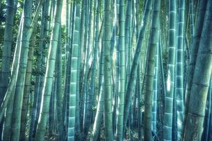 生い茂った竹林の写真素材 [FYI04833482]