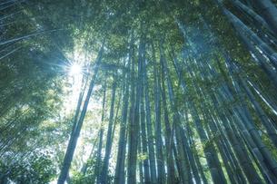 隙間から光がさす竹林の写真素材 [FYI04833484]