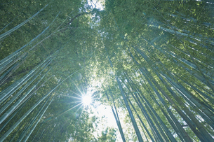 隙間から光がさす竹林の写真素材 [FYI04833485]