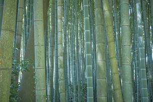 生い茂った竹林の写真素材 [FYI04833487]