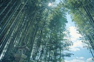 竹林と灯籠の写真素材 [FYI04833488]