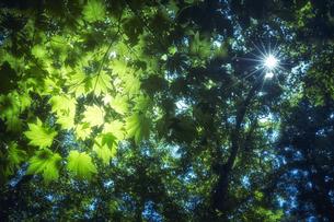 隙間から光がさす森林の写真素材 [FYI04833495]