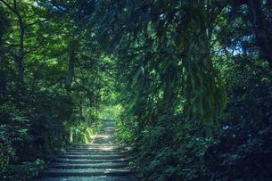 森林の中の道の写真素材 [FYI04833496]