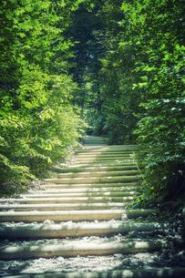 森林の中の道の写真素材 [FYI04833497]