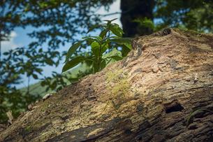 森林の中の倒れた木の幹の写真素材 [FYI04833500]