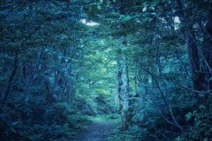 生い茂った森林の写真素材 [FYI04833513]