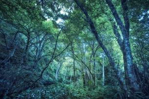 生い茂った森林の写真素材 [FYI04833514]