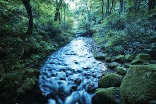 森林の中の川の写真素材 [FYI04833515]