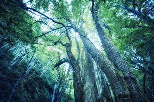 生い茂った森林の写真素材 [FYI04833517]