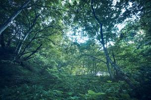 生い茂った森林の写真素材 [FYI04833518]