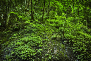 生い茂る森の写真素材 [FYI04833529]