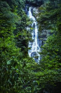 森林の中の滝の写真素材 [FYI04833530]