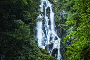 森林の中の滝の写真素材 [FYI04833531]