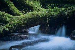 勢いよく流れる水と横たわった幹の写真素材 [FYI04833544]