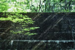 森の中のブロック塀の写真素材 [FYI04833546]