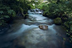森林の中を勢いよく流れる川の写真素材 [FYI04833547]