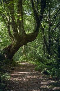 森の中の道の写真素材 [FYI04833548]