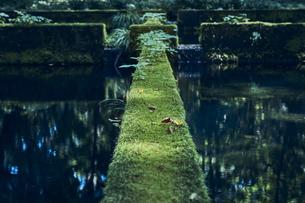 苔の生えた堰堤の縁の写真素材 [FYI04833549]