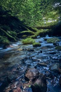 森林の中の川の写真素材 [FYI04833550]