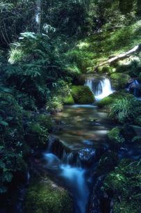 森林の中の川の写真素材 [FYI04833551]