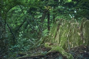 森林の中の切り株の写真素材 [FYI04833558]