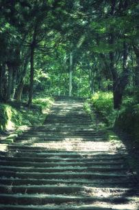 森の中の階段の写真素材 [FYI04833562]