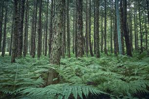 生い茂った森林の写真素材 [FYI04833563]