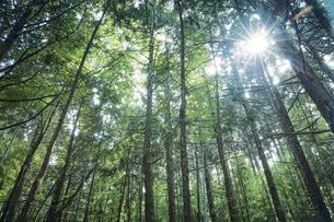 生い茂った森林の写真素材 [FYI04833566]