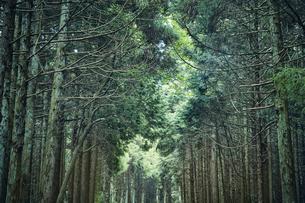 生い茂った森林の写真素材 [FYI04833567]