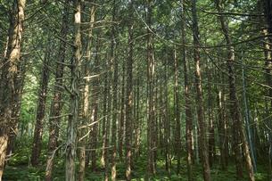 生い茂った森林の写真素材 [FYI04833571]