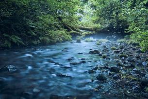 森林の中の川の写真素材 [FYI04833572]
