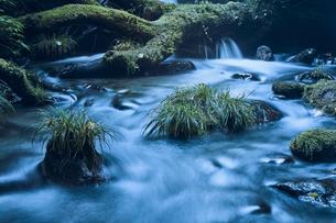 森林の中の川の写真素材 [FYI04833573]