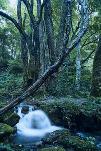 森林の中の川の写真素材 [FYI04833575]