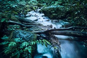森林の中の川の写真素材 [FYI04833576]