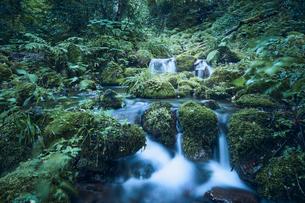苔の生えた岩と川の写真素材 [FYI04833577]