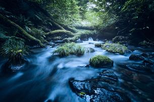 苔の生えた岩と川の写真素材 [FYI04833578]