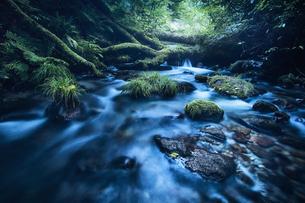 森林の中を流れる川の写真素材 [FYI04833579]
