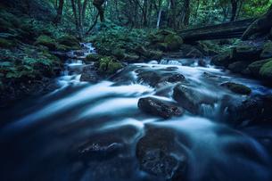 森林の中を流れる川の写真素材 [FYI04833580]