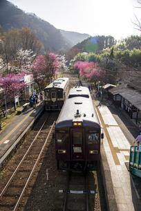 わたらせ渓谷鉄道 満開の桜とハナモモの花咲くわたらせ渓谷線列車交換の神戸駅の写真素材 [FYI04833581]