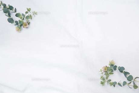 白のファブリックに置かれたドライフラワーのフレームの写真素材 [FYI04833655]