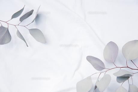白のファブリックに置かれたドライフラワーのフレームの写真素材 [FYI04833657]
