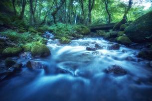 森林の中を流れる川の写真素材 [FYI04833660]