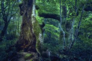 いろんな種類の木が生えた森の写真素材 [FYI04833661]