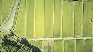 上空から見た棚田の景色の写真素材 [FYI04833663]