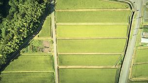 上空から見た棚田の景色の写真素材 [FYI04833664]