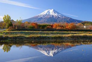 山梨県 秋の水田に映る富士山の写真素材 [FYI04833730]